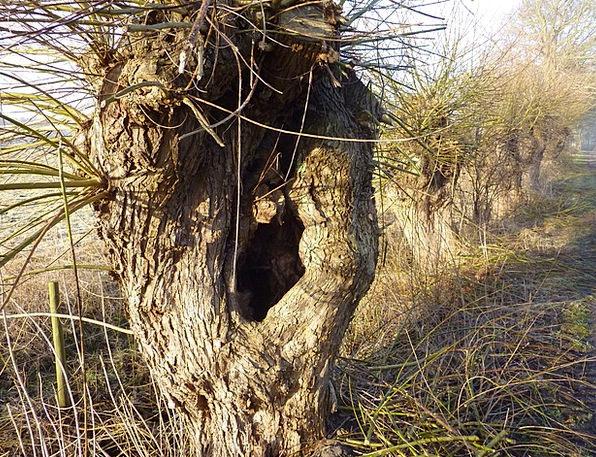 Graze Scratch Meadow Tree Sapling Pasture Braid Po