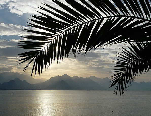 Sea Marine Vacation Viewpoint Travel Frond Leaf Ou