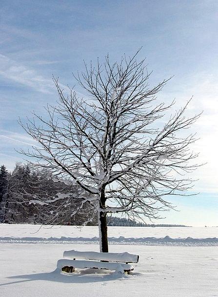Tree Sapling Landscapes Snowflake Nature Winter Se