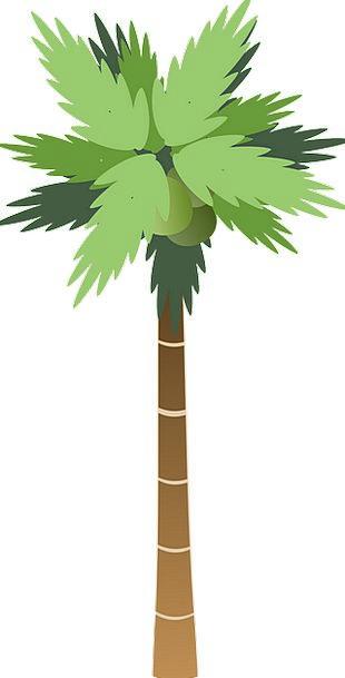 Palm Tribute Sapling Tall High Tree Elongated Trop