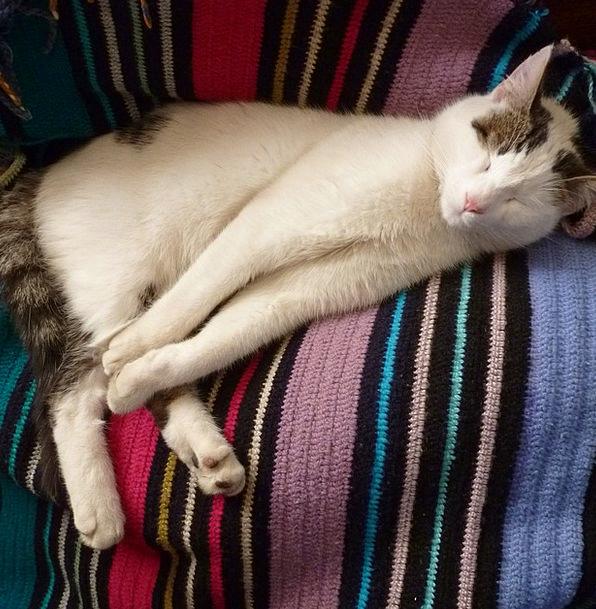 Cat Catlike Sleeping Asleep Feline Kitten Fur Dome
