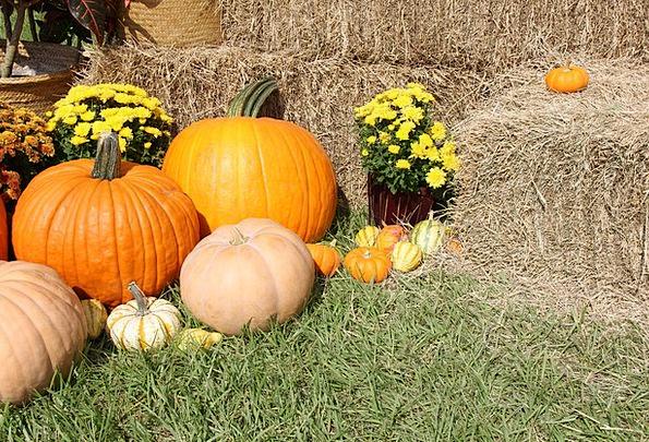 Pumpkins Fall Reduction Gourds Halloween Thanksgiv