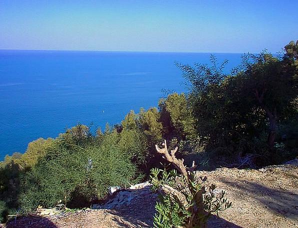View Opinion Marine Mediterranean Sea Sea Shrubs B