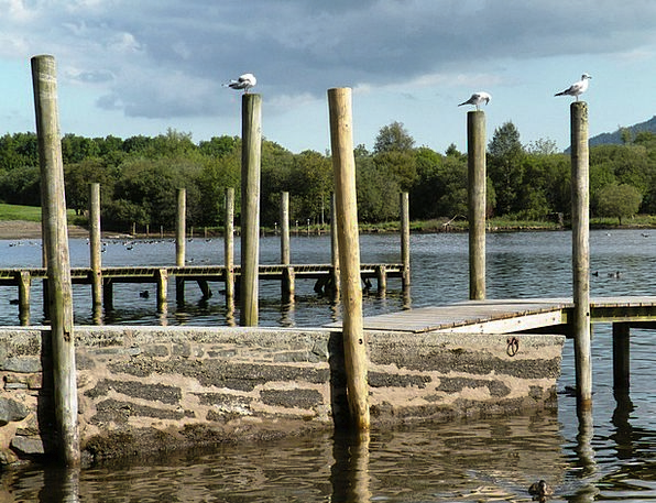 Seagulls Poles Water Aquatic Posts Lake Freshwater