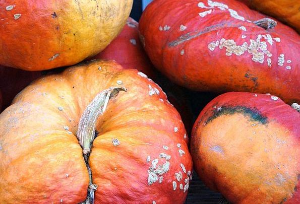 Pumpkin Landscapes Fall Nature Gourd Autumn Color