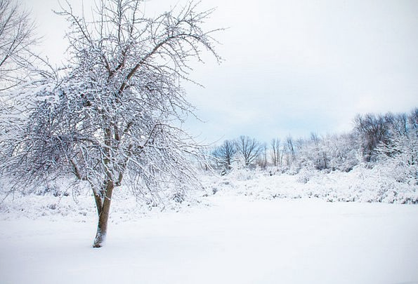 snowy tree landscapes snowflake nature winter season snow