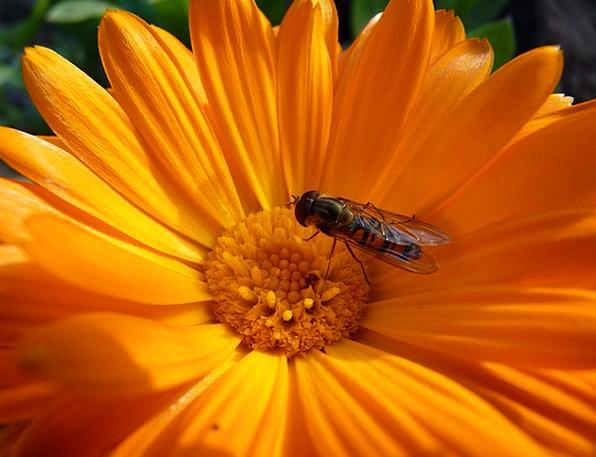 Flower Floret Landscapes Nature Orange Carroty Hov
