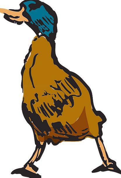 Bird Fowl Stoop Style Chic Duck Walking Animal Fea