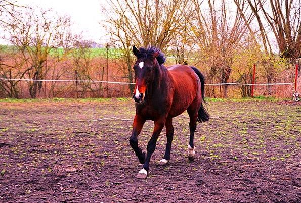 Horse Mount Physical Ride Trip Animal Gallop Dash