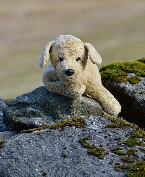 Plush Dog Teddy Bear Teddy Stuffed Animal Soft Toy