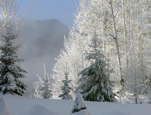 Winter Season Landscapes Reveille Nature Foggy Unc
