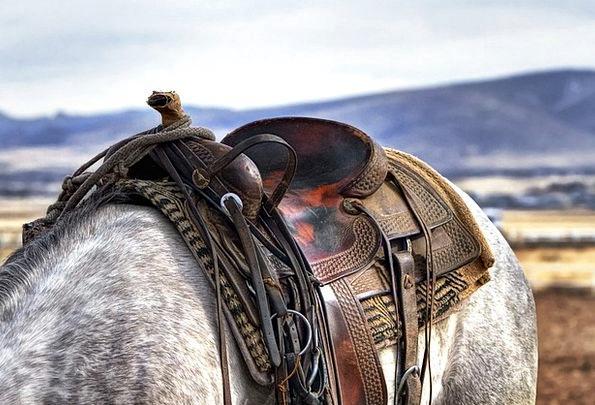 Saddle Burden Mount Cowboy Unreliable Horse Wester