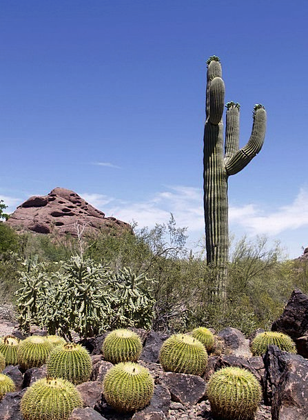 Cactus Landscapes Vegetable Nature Rocks Pillars P