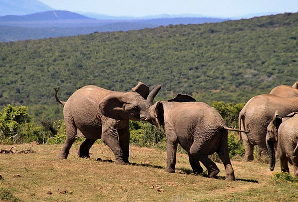 Elephant Monster Africa African Bush Elephant Natu