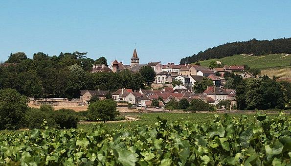 Village Community Maroon Vines Creepers Burgundy S