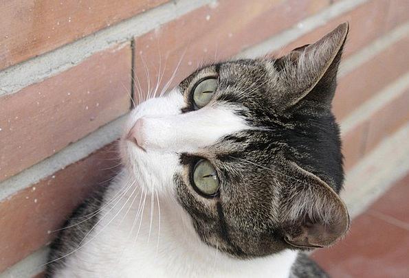 Cats Felines Faunae Cat'S Eyes Animals Green Eyes