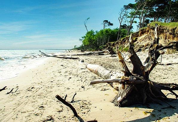 Baltic Sea Vacation Shore Travel Darß Coast Beach