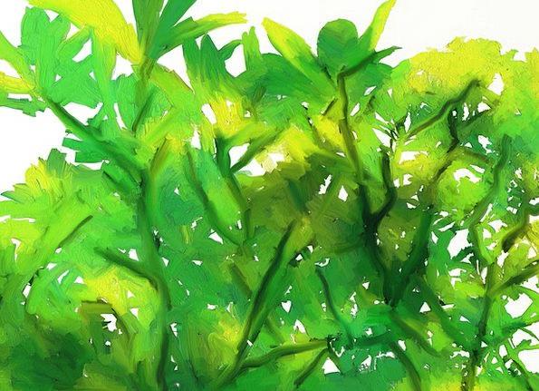 Kumkumam Digital Painting Kerala Tree Sapling Leav