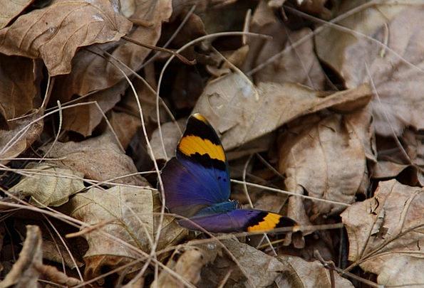 Butterfly Landscapes Floret Nature Flora Vegetatio