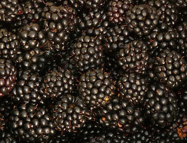 Blackberries Fruits Ovaries Berries Harvest Crop B