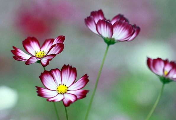 Cosmos Universe Flowers Plants The Universe Neat W