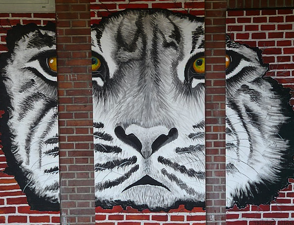 Tiger Painting Image Art Tiger Eye Grid Network Wi