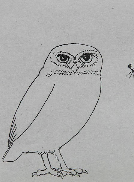 Owl Fowl Animal Physical Bird Coloring Pages Imagi