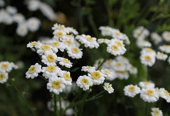 Flowers plants landscapes snowy nature nature countryside flowers plants landscapes snowy nature nature coun mightylinksfo