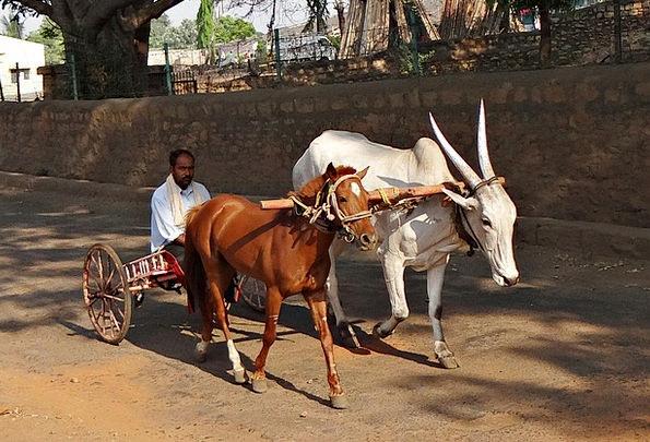 Cart Wagon Ox Cart Pony Cart Hybrid Cross Incredib
