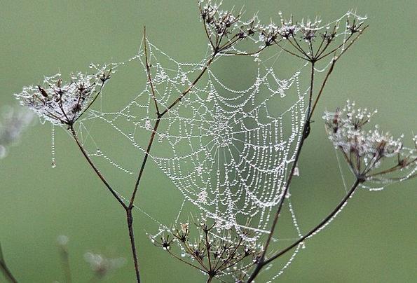 Cobweb Landscapes Precipitation Nature Nature Coun