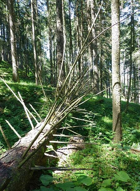 Tree Sapling Landscapes Nature Aesthetic Artistic