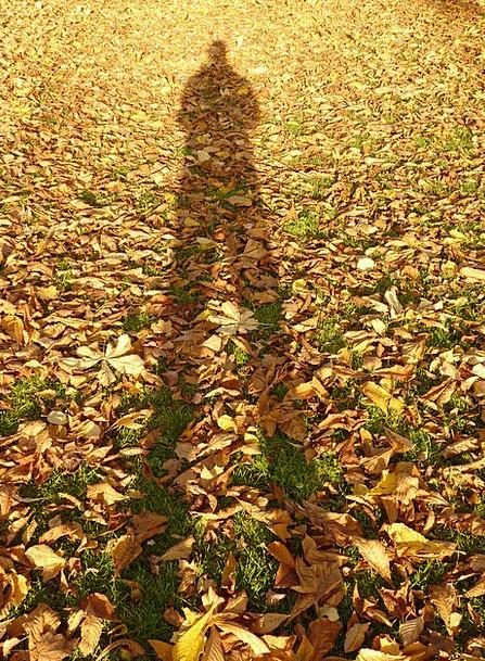 Leaves Greeneries Fall Shadow Gumshoe Autumn Hispa