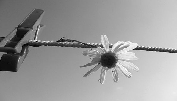 Flower Floret Clothespin Petals Clothesline Rope S