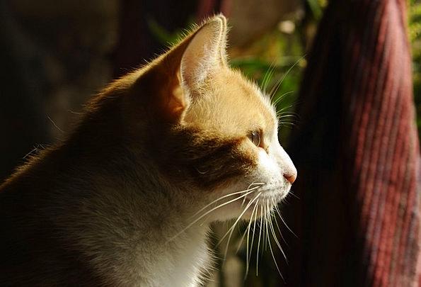 Cat Physical Feline Catlike Animal