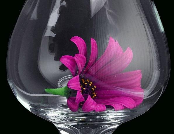 Daisy Landscapes Cut-glass Nature Flower Floret Gl