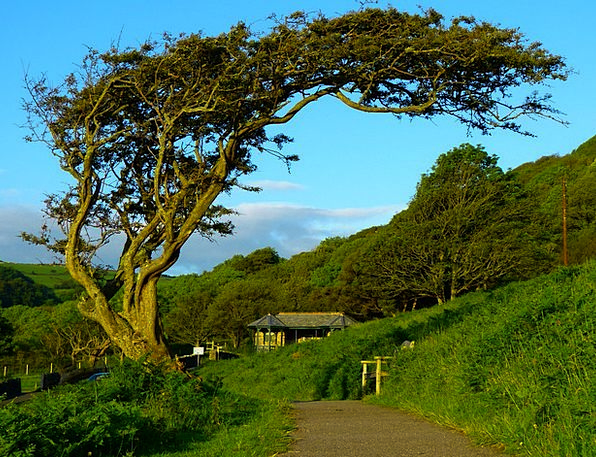 Tree Sapling Landscapes Bent Nature Wind Bent Croo