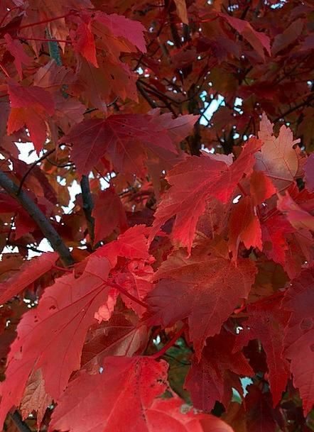 Autumn Landscapes Sapling Nature Leaves Greeneries