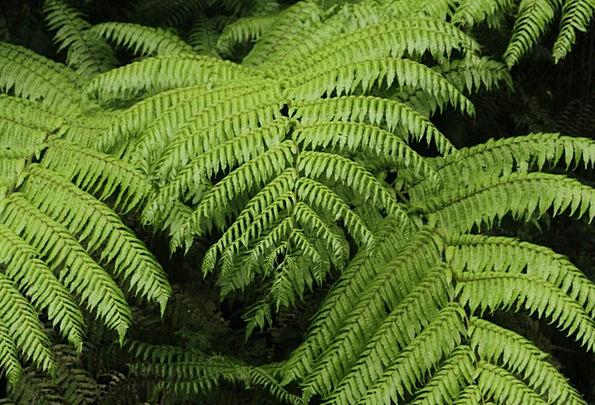 Fern Leaf Flora Biodiversity Vegetation Jungle Rai