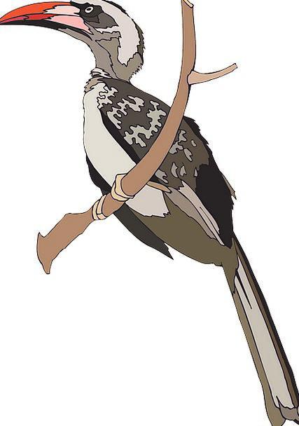 Bird Fowl Grey Old Hornbill Branch Division Free V