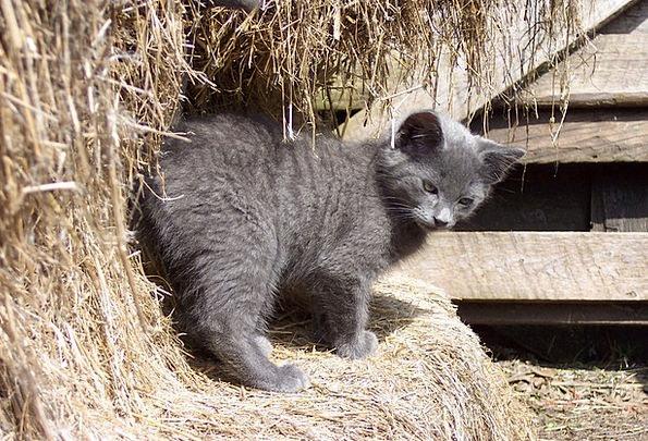 Barn Outbuilding Cat Kitten Feline Catlike Farm Co