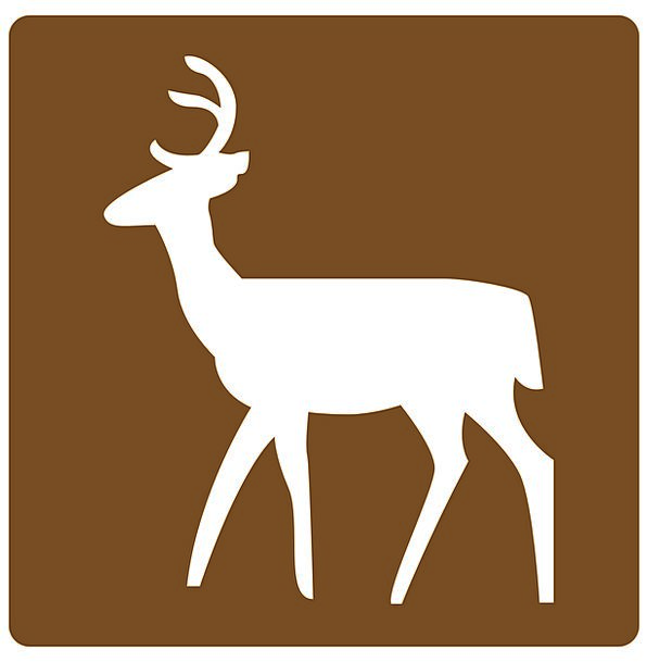 Deer Info Area Part Information Animal Physical Fr