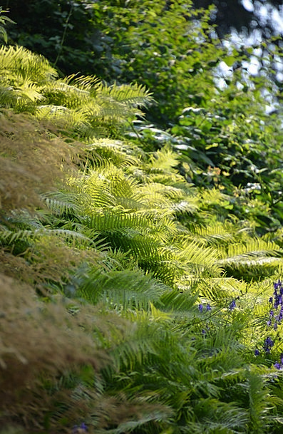 Forest Woodland Landscapes Vegetable Nature Ferns