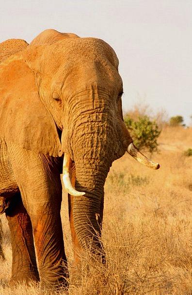 Elephant Monster Physical Family Domestic Animal E