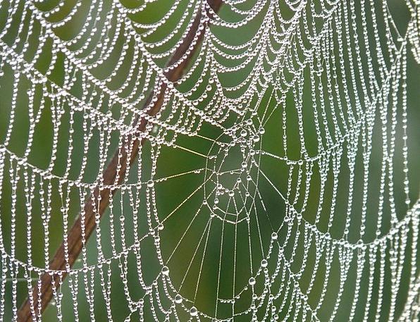 Cobweb Dew Precipitation Morgentau Dewdrop Droplet