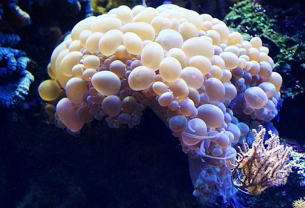 Bubble Fizz Animal Physical Coral Brain Aquatic Wa