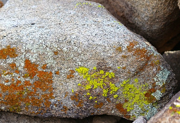 Lichen Textures Pillar Backgrounds Joshua Tree Nat
