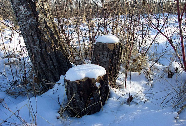 Snow Snowflake Landscapes Base Nature Tree Sapling