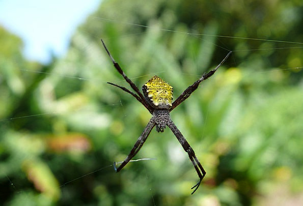 Spider Landscapes Countryside Nature Hawaii Nature
