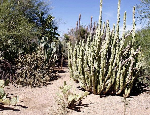 Cactus Landscapes Reward Nature Plant Vegetable De