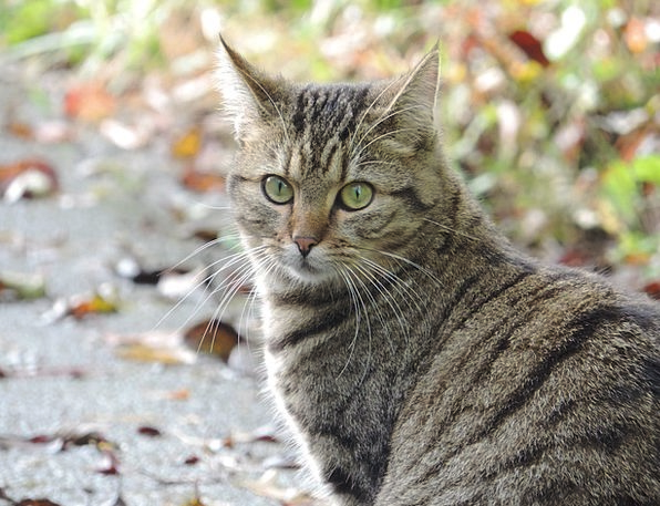 Cat Feline Countryside Autumn Fall Nature Domestic